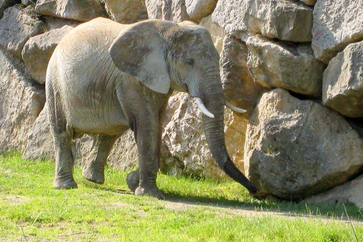 elefante-schoenbrunn