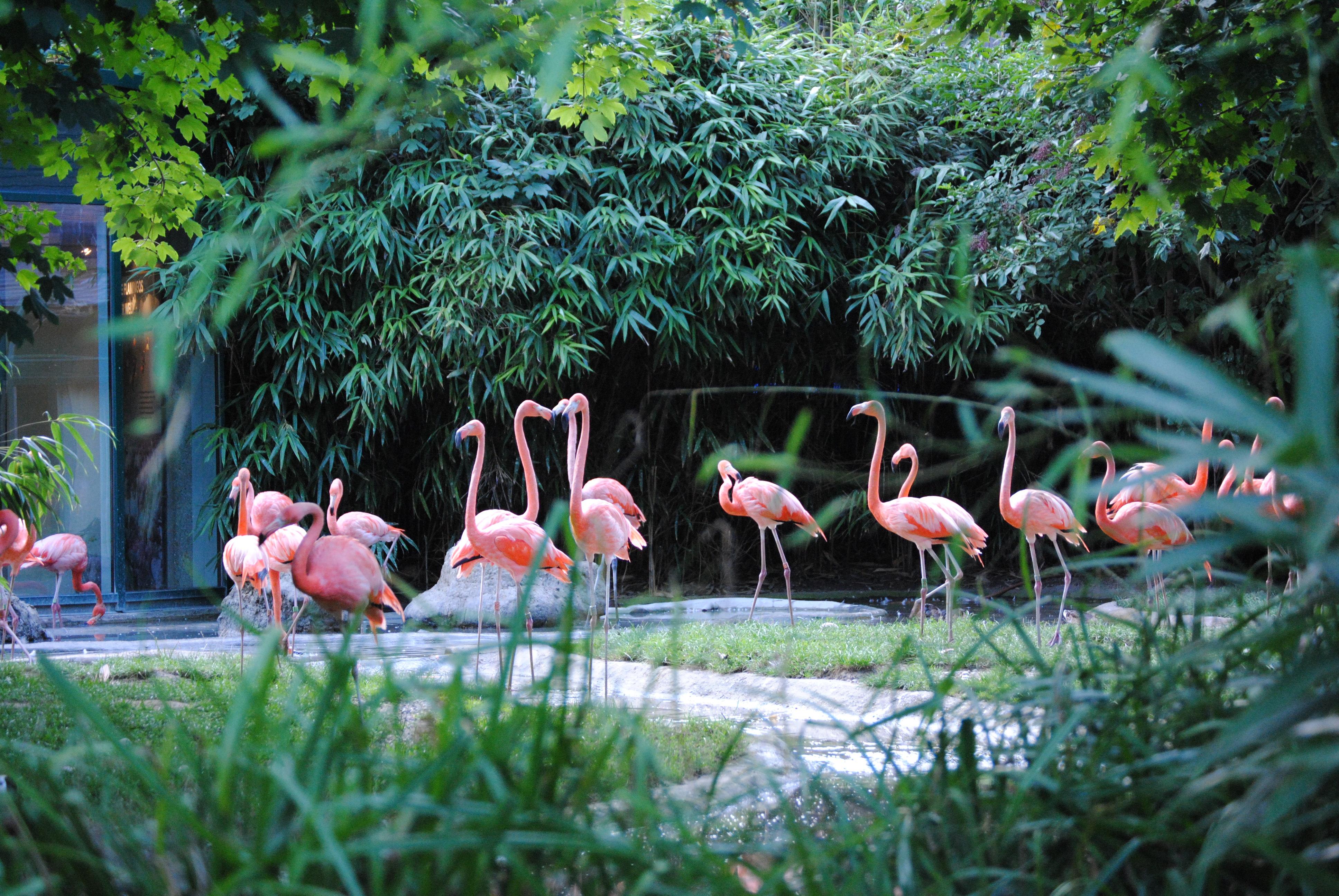 Visita el zoo de Schönbrunn de Viena