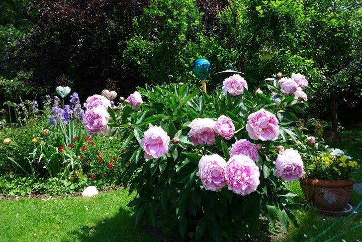 jardin-estacion-termal