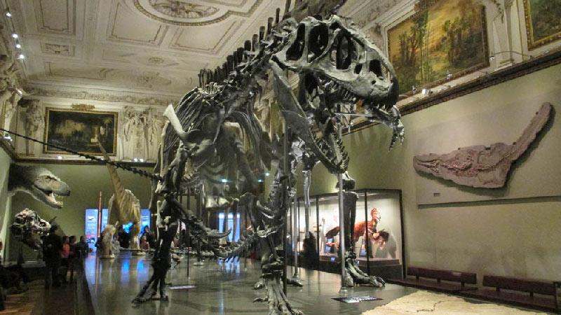 Dinosaurios en el Museo