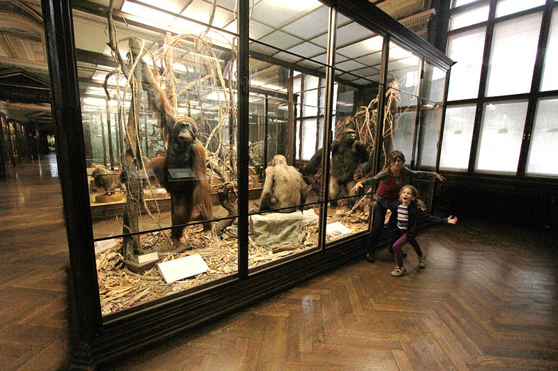 museo historia natural en viena