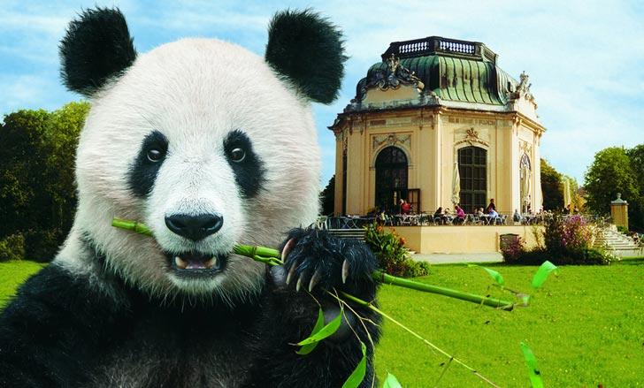 pandas-zoologico-schonbrunn