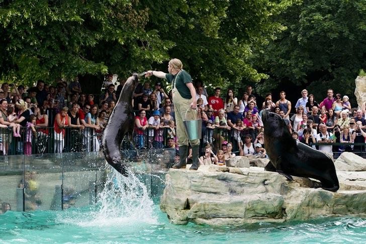 Schönbrunn, el parque zoológico más antiguo del mundo